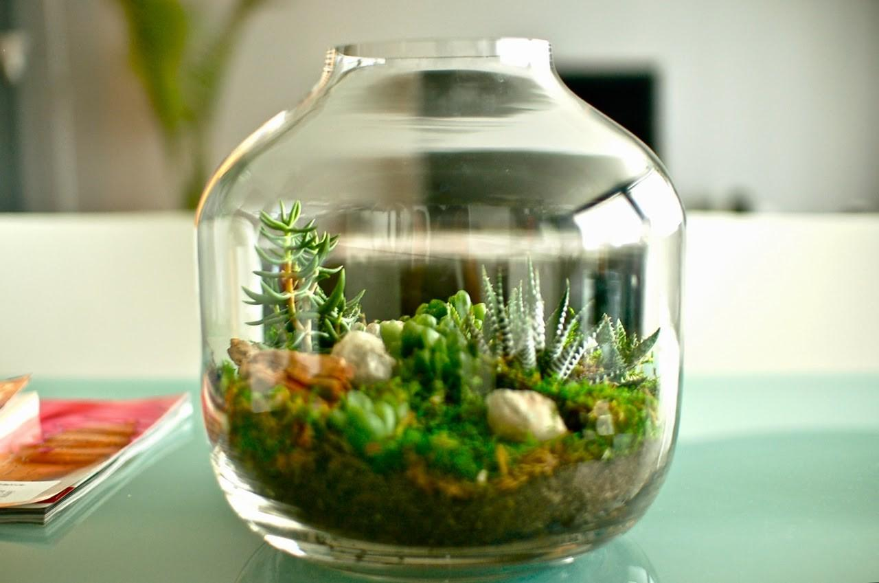 100 Beautiful Terrariums Tiny Gardens Ideal Small
