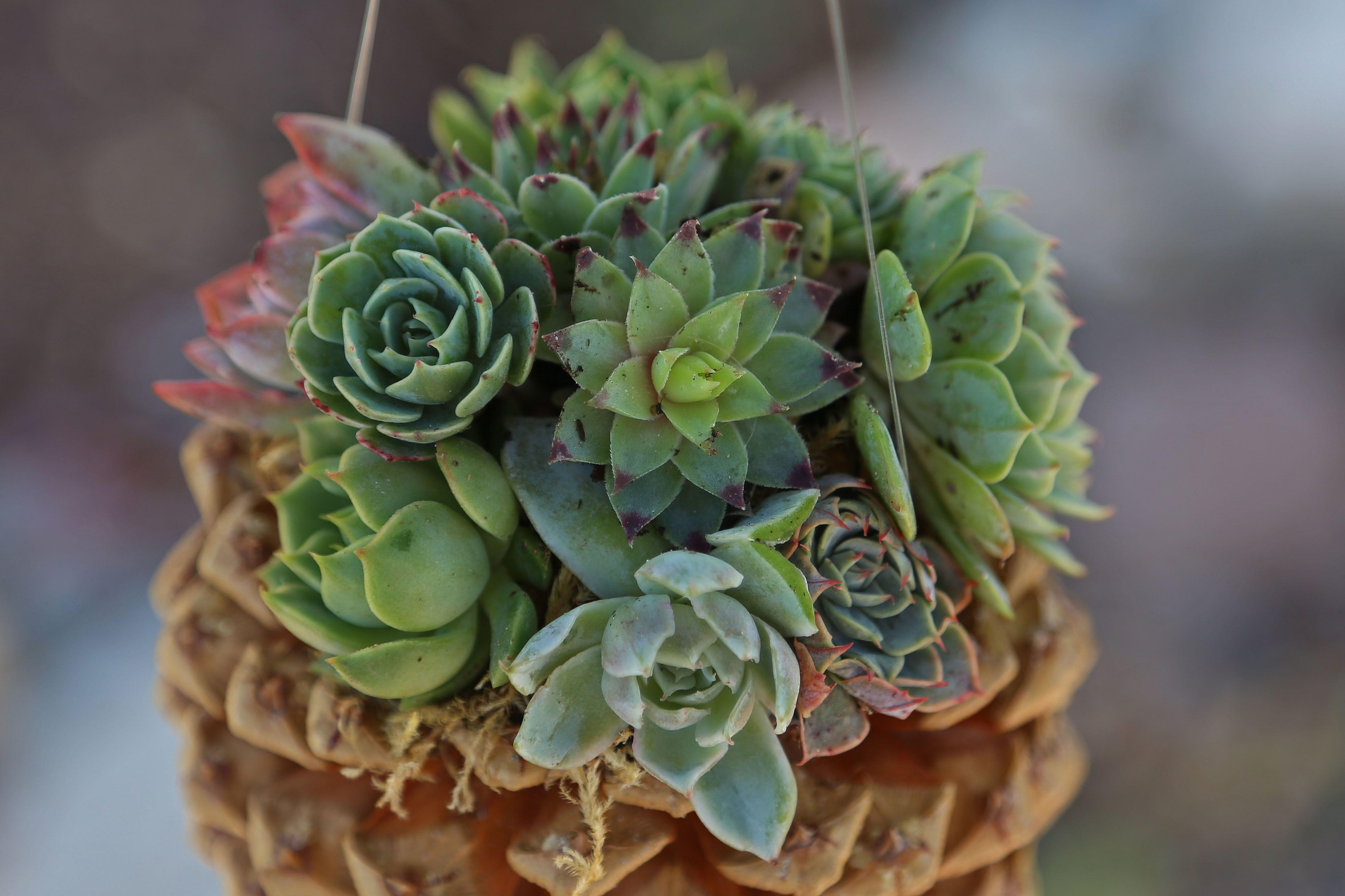 100 Succulent Planter Anything