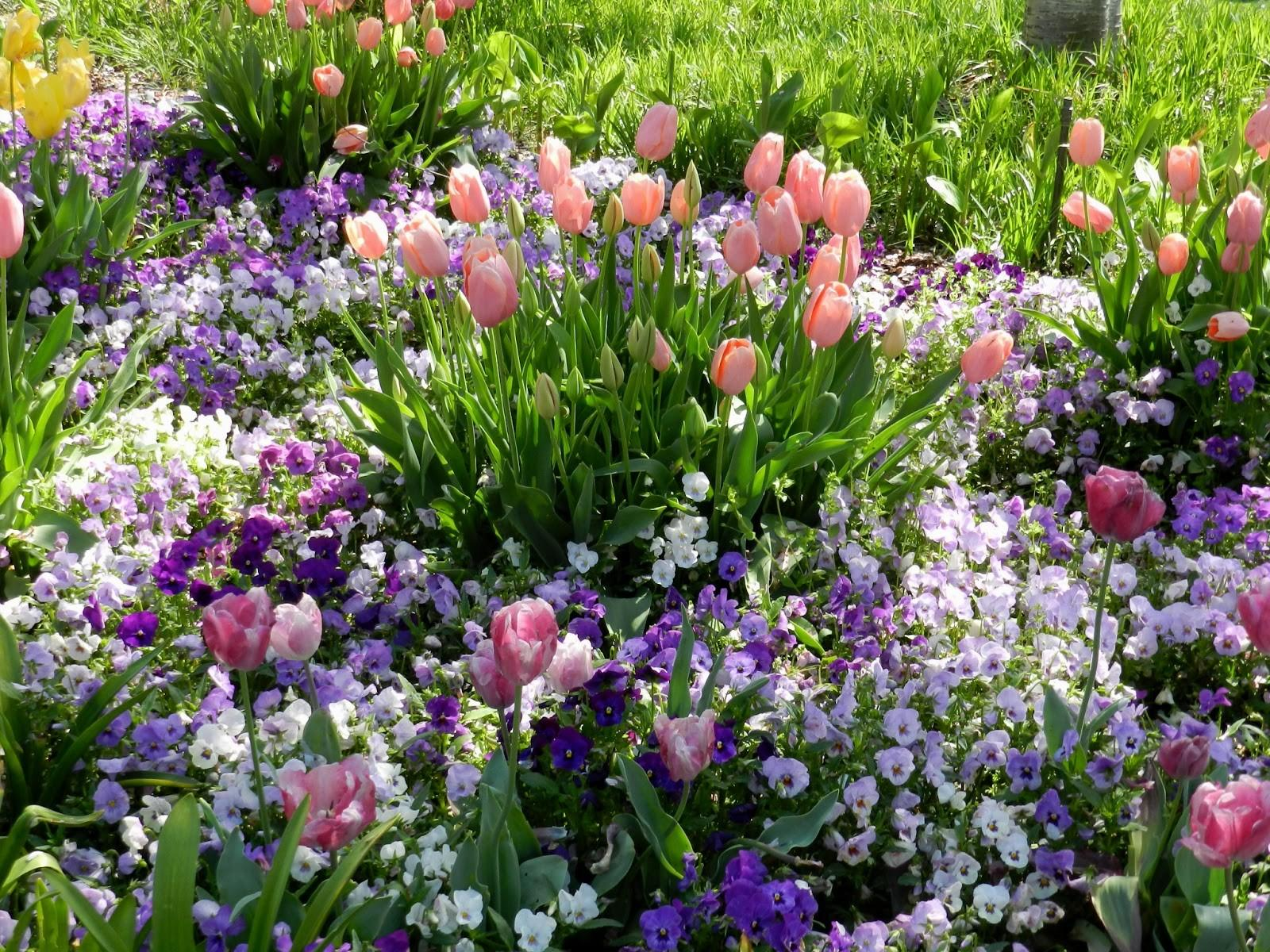 1000 Front Flower Bed Ideas