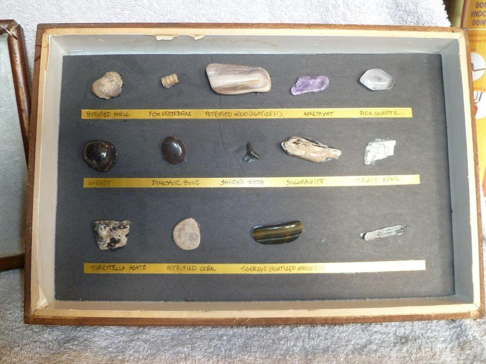 14pcs Fossil Mineral Specimen Teaching Collection Rock