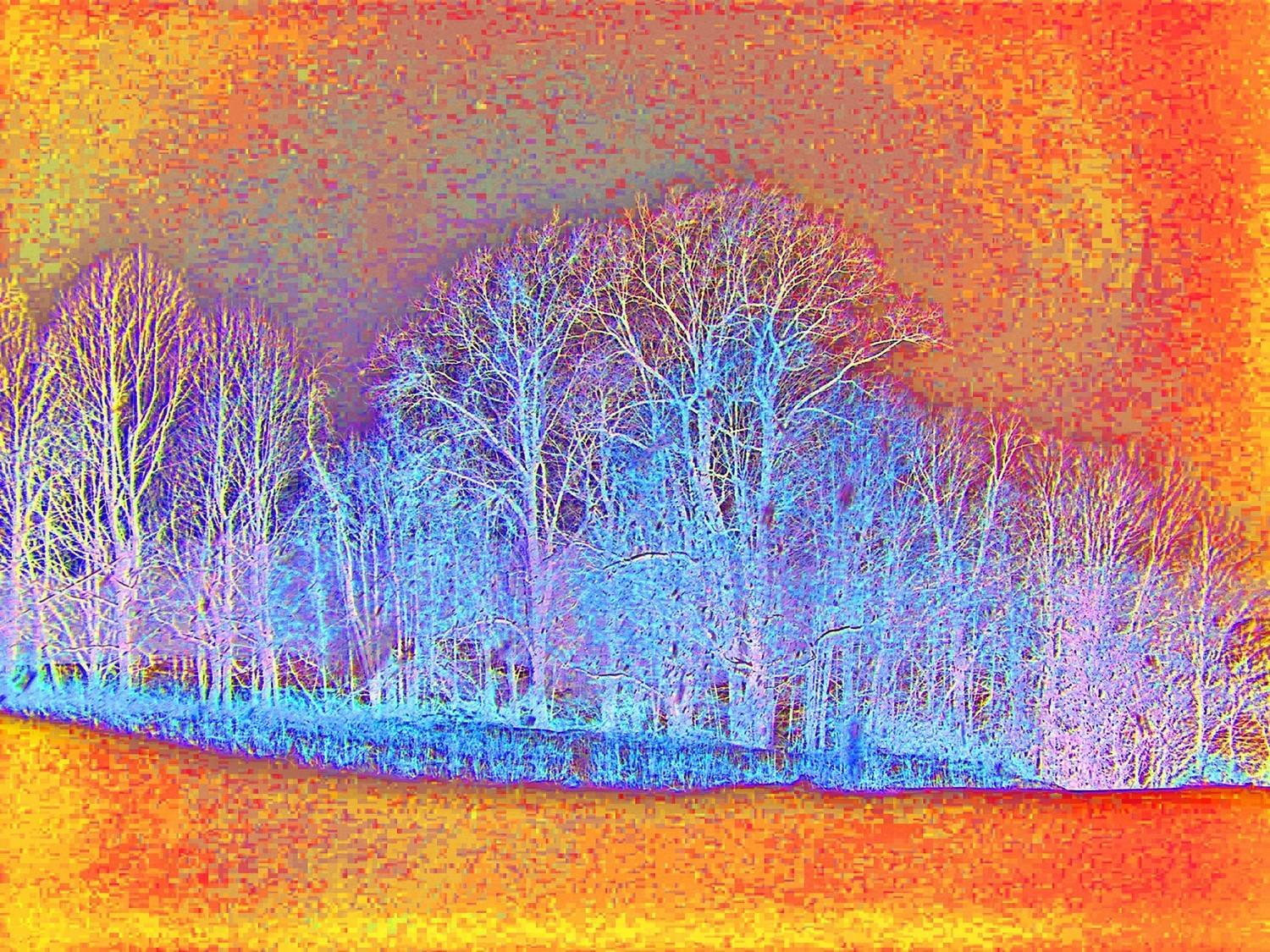 Abstract Tree Landscape Modern Art Photography Print