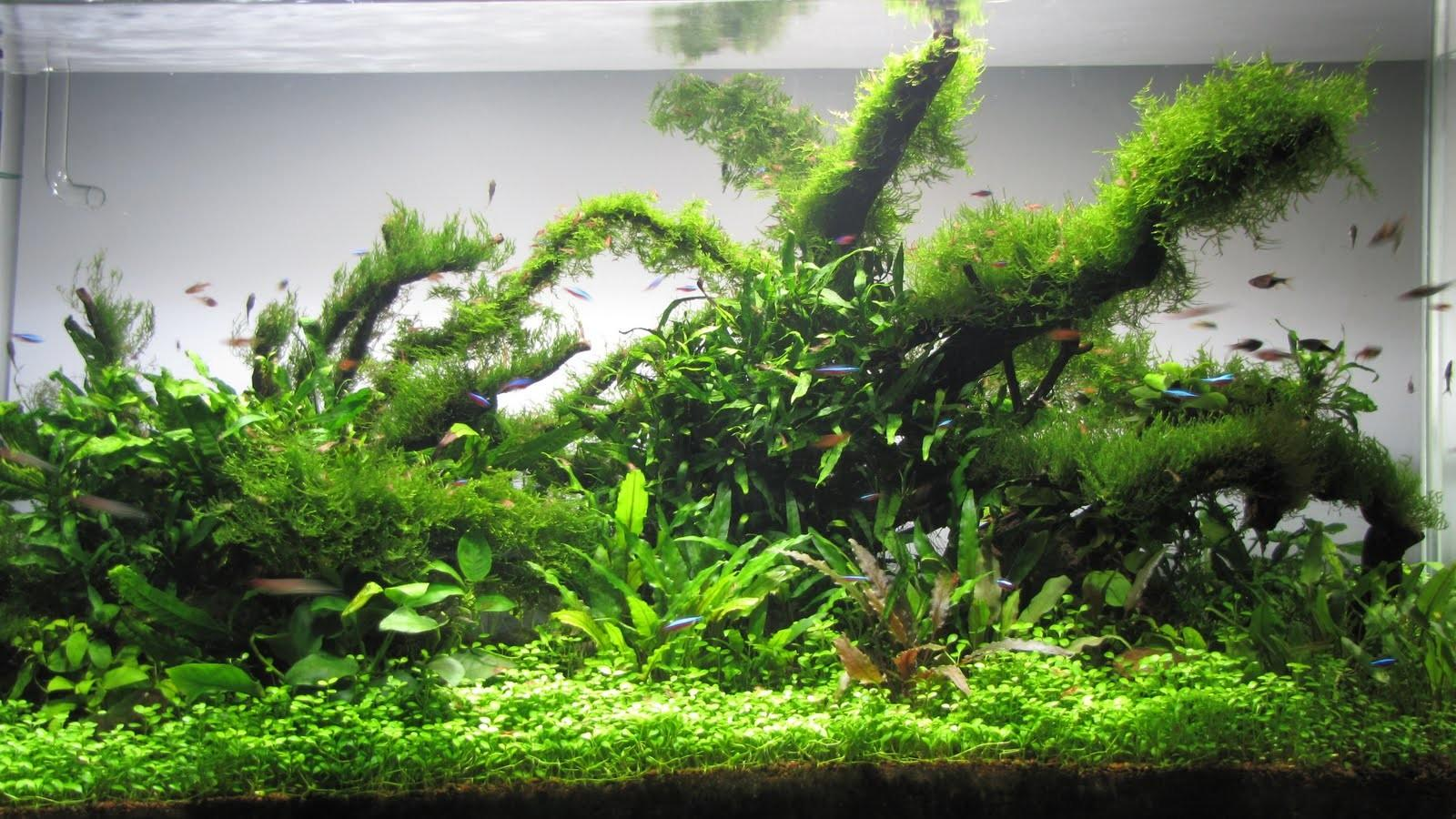 Affable Aquarium Landscapes