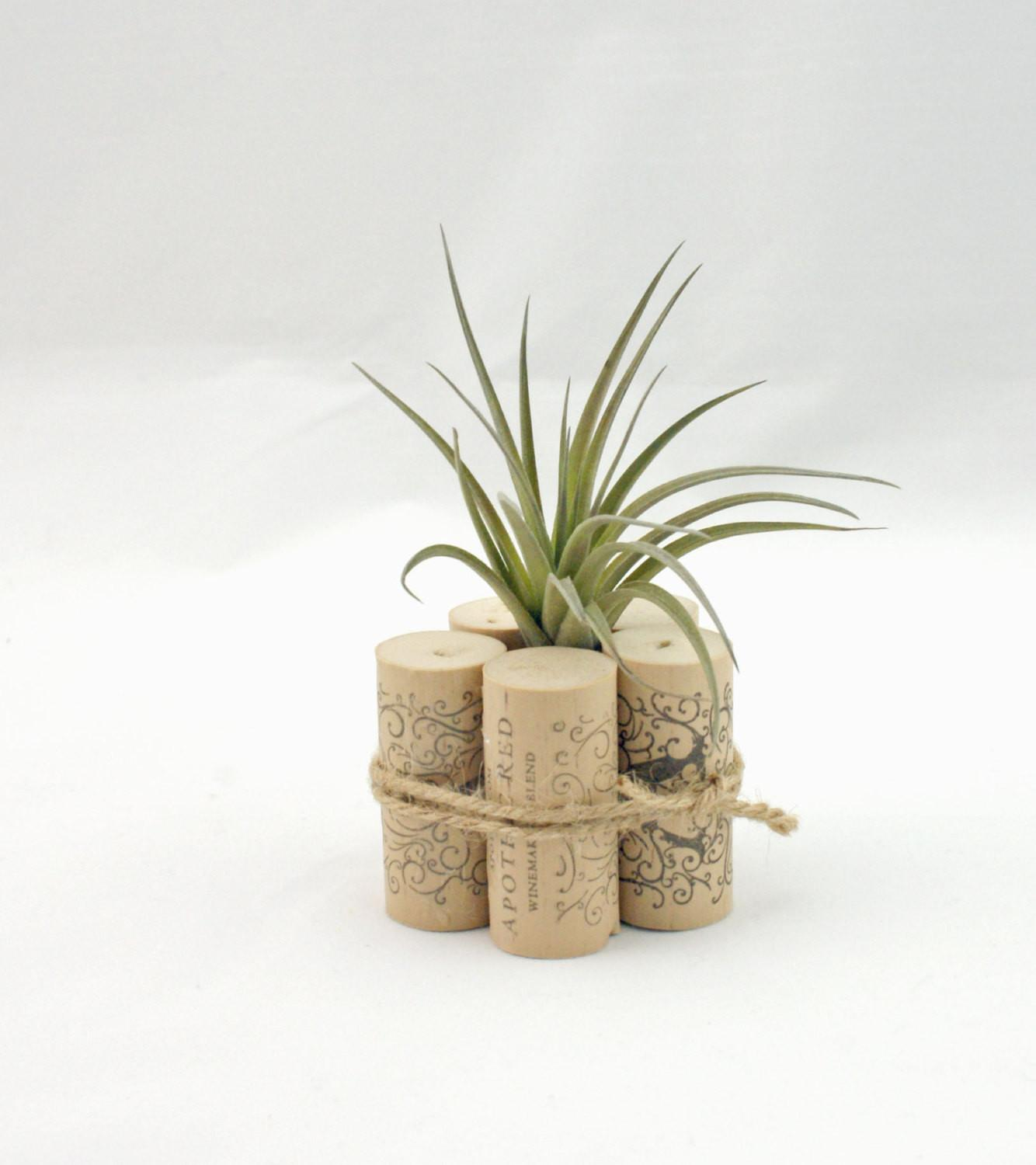 Air Plant Container Wine Cork Decor Rustic