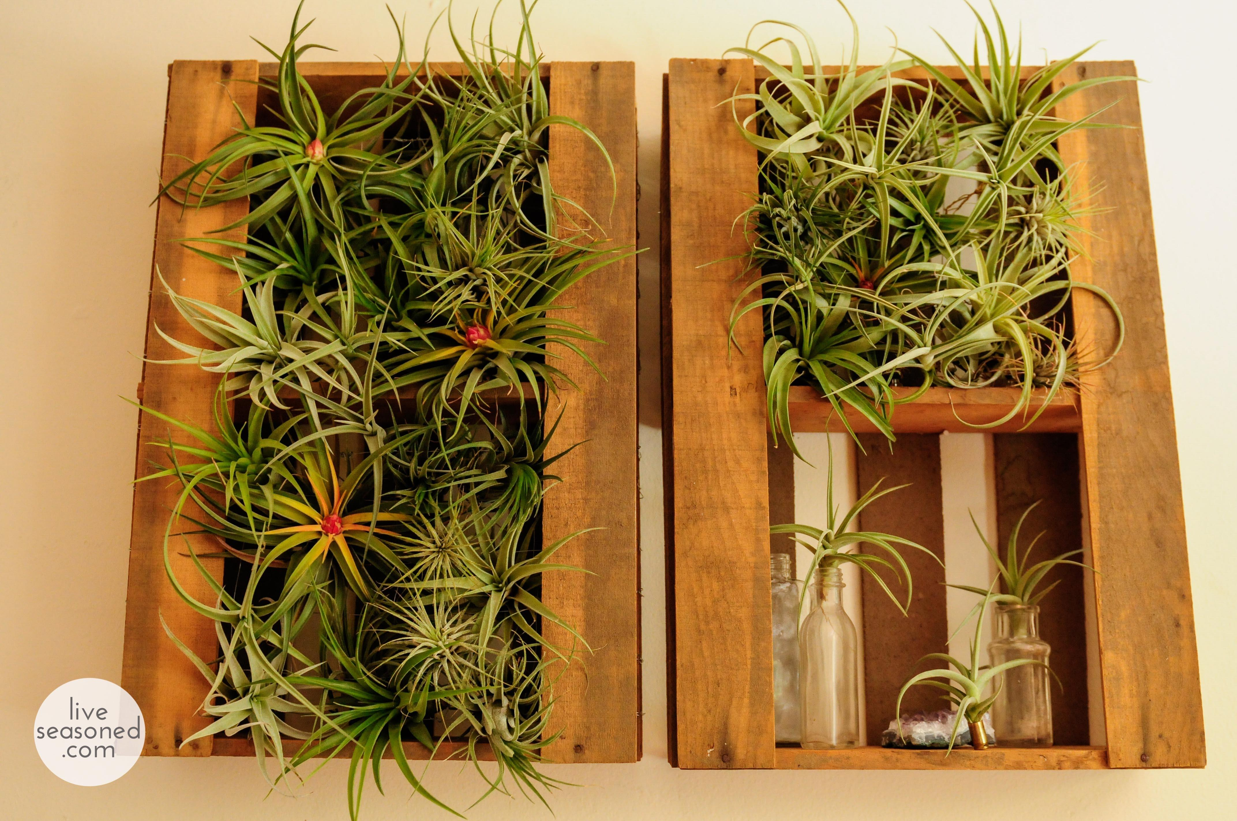 Air Plant Display Diy