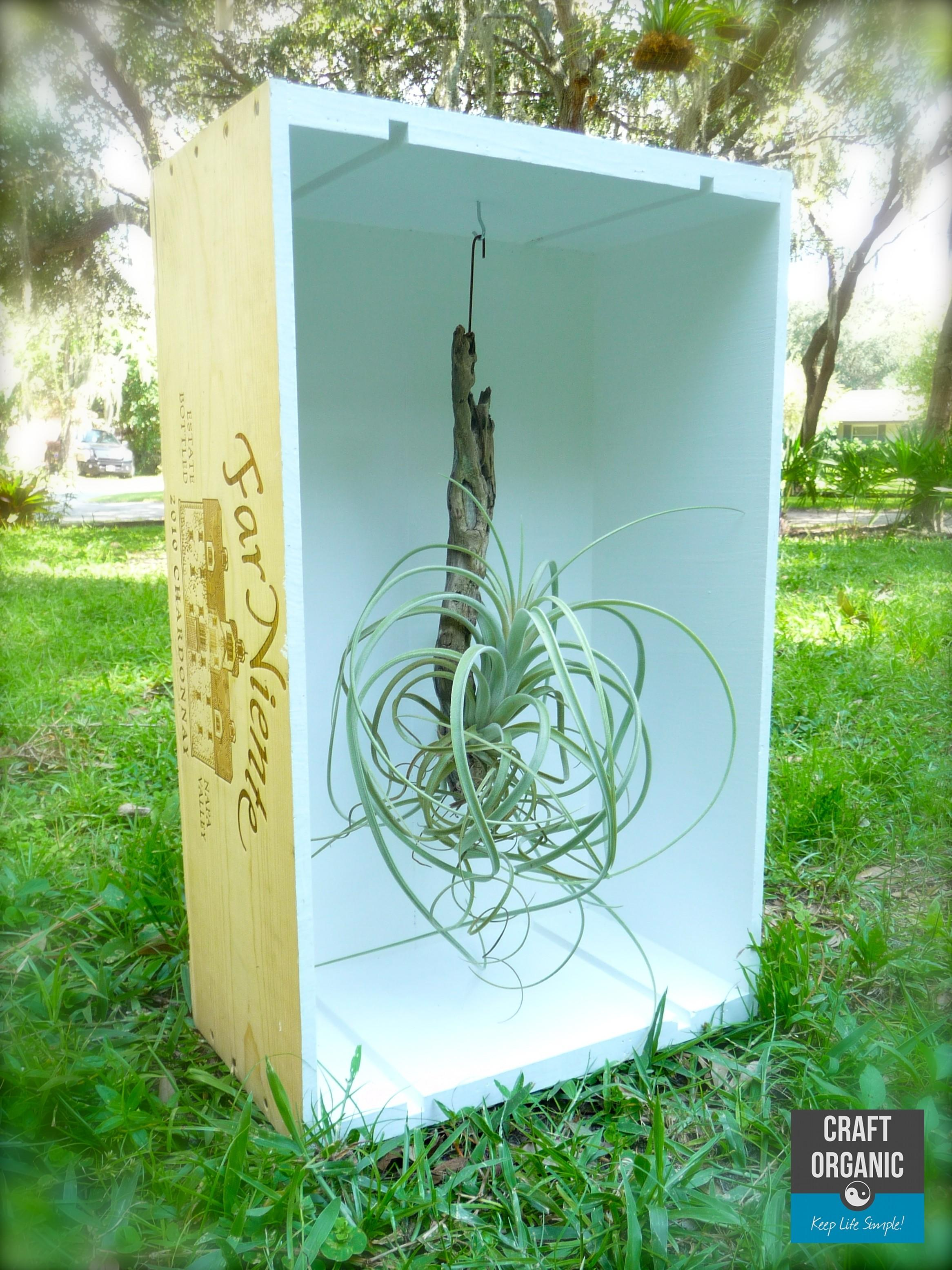 Air Plant Display Wine Crate Craft Organic