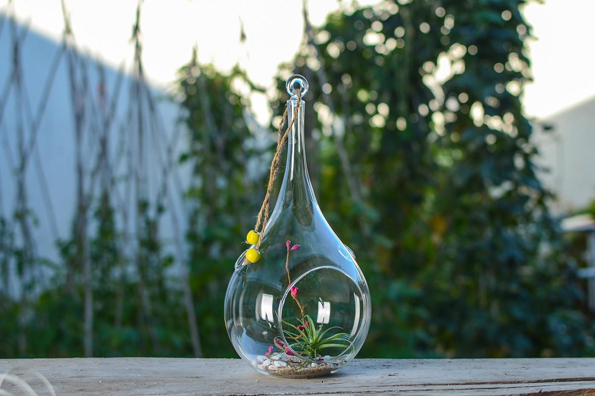 Air Plant Hanging Glass Vases Terrariums