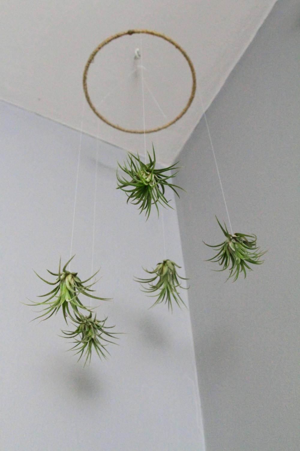 Air Plant Mobile Natural Living Decor Home