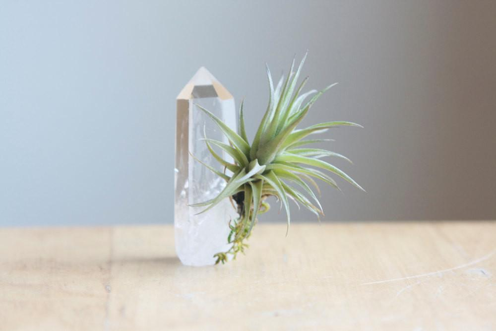 Air Plant Quartz Crystal Point Unique Airplant Display