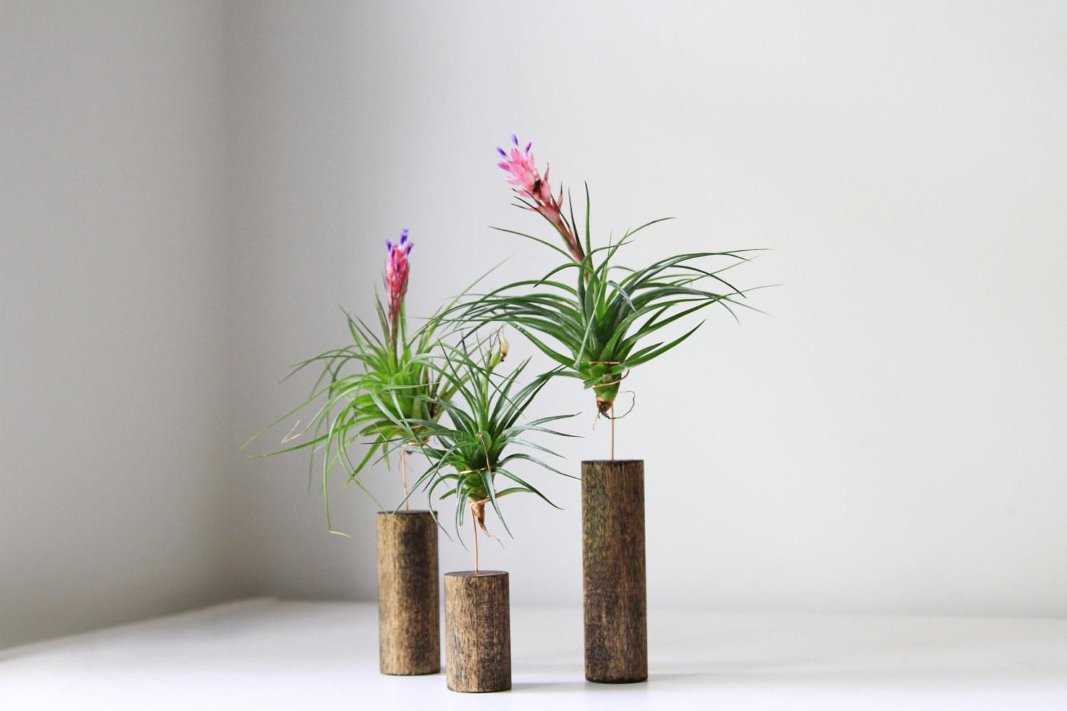 Air Plant Stand Modern Home Decor Gemsofthesoil