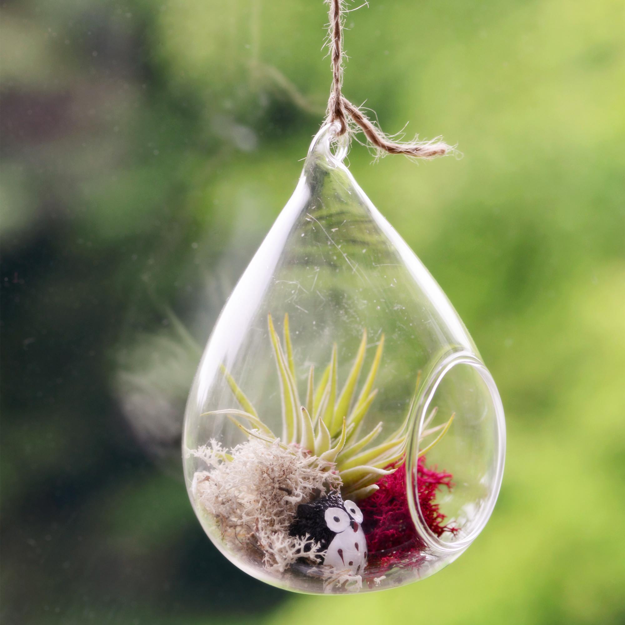 Air Plant Terrarium Glass Water Drop Hanging Vase