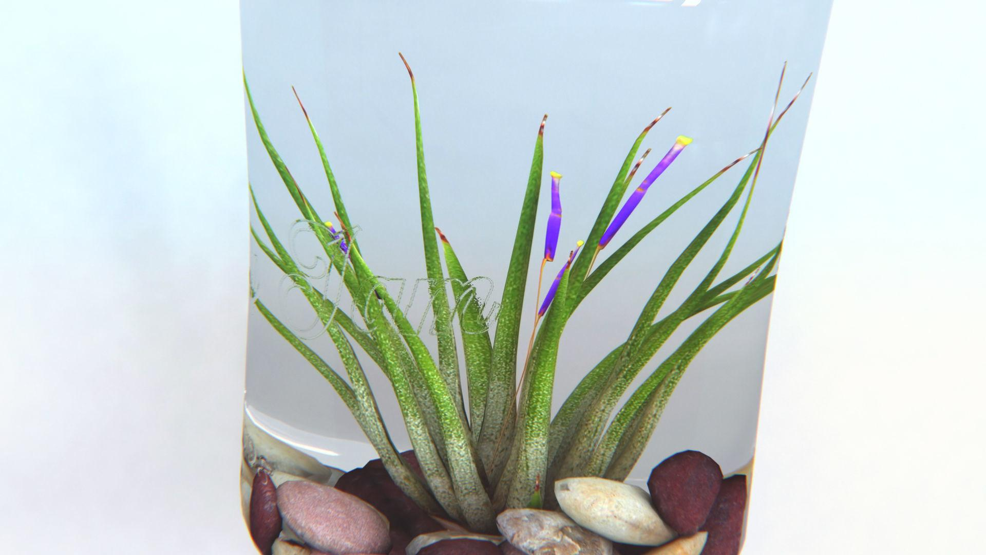 Air Plant Wall Decor Model Max Cgtrader