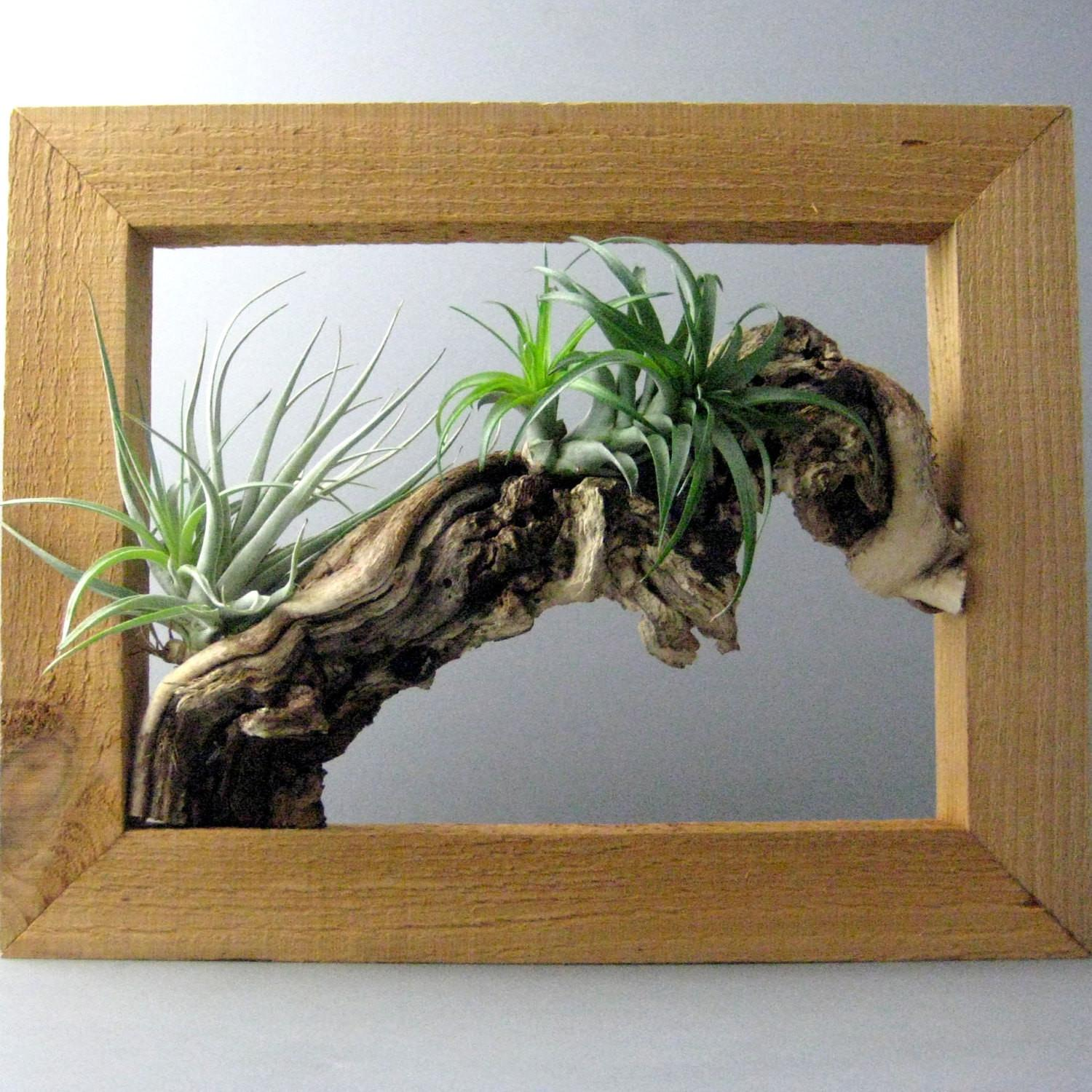 Air Plant Wall Frame