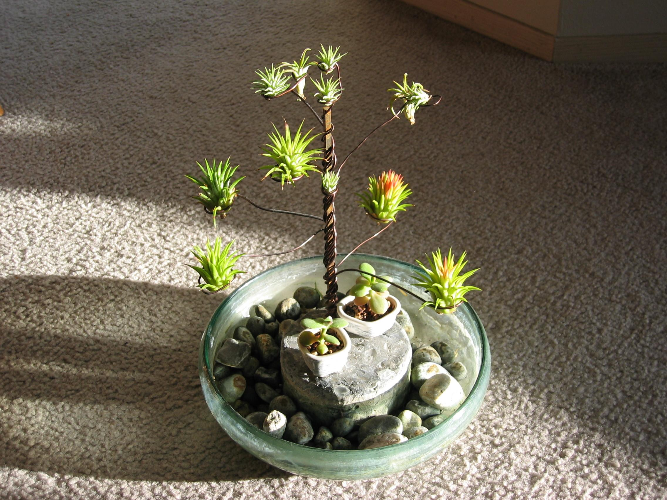 Air Plants Frompo