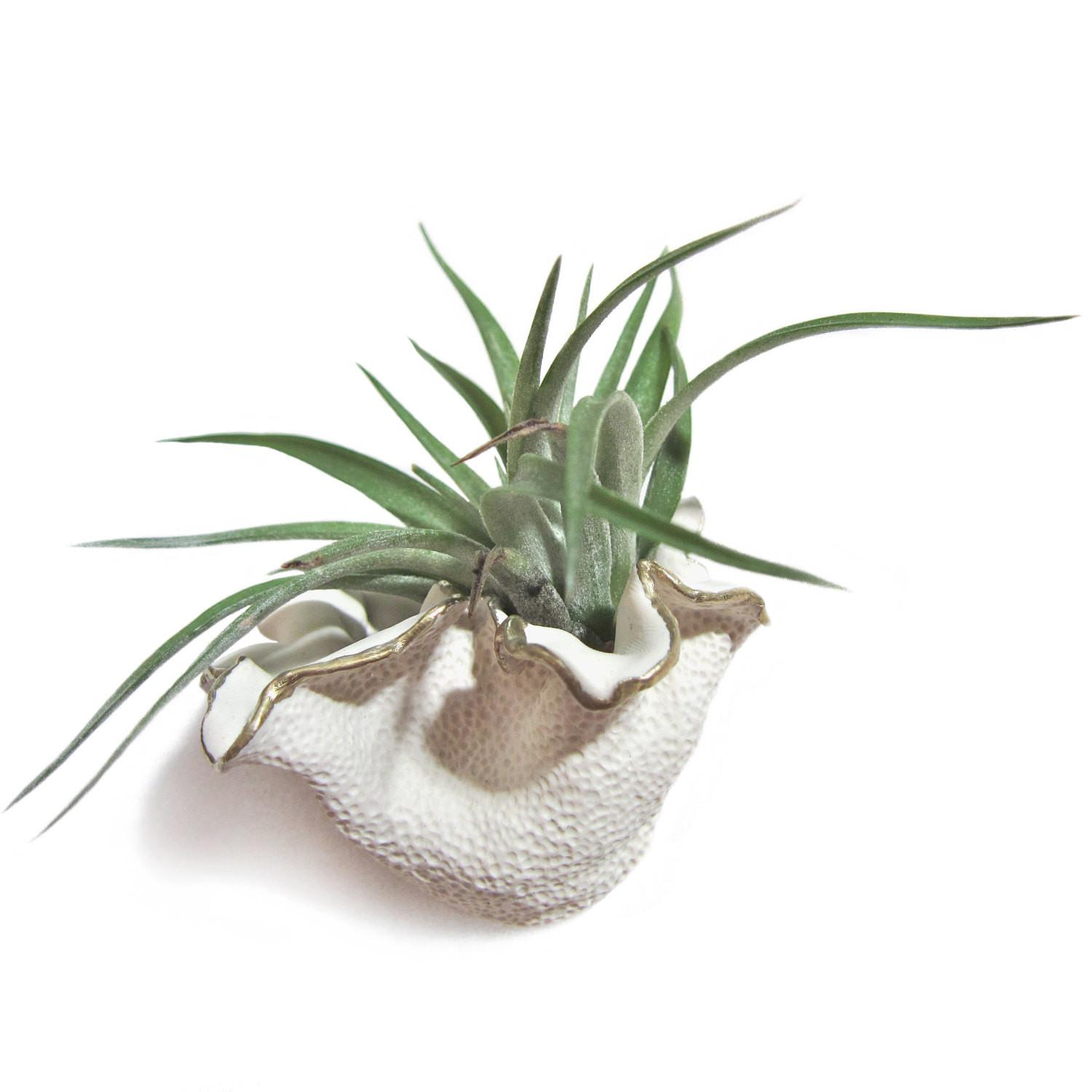 Airpockets Handmade Wall Vases Air Plants