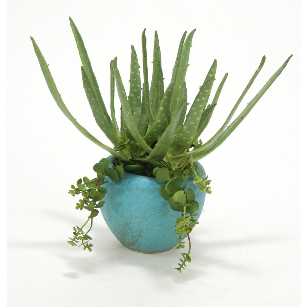 Aloe Hanging Succulents Large Turquoise Planter