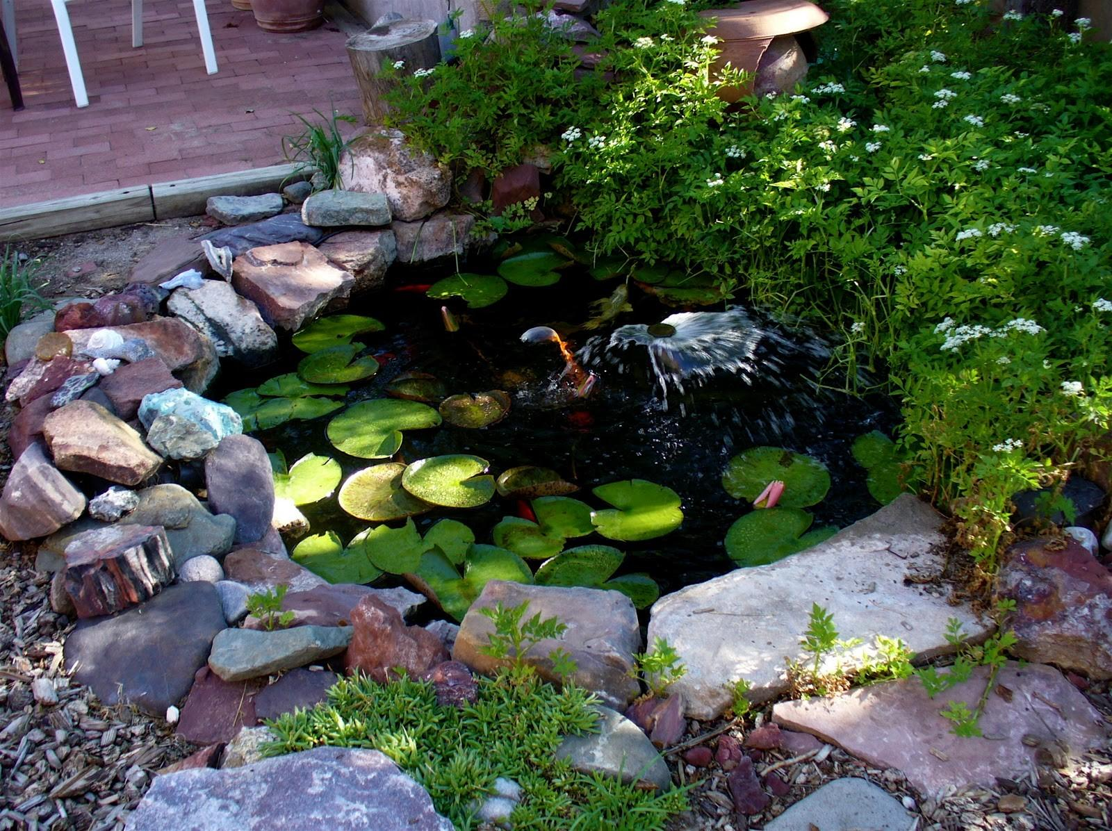 Alt Build Blog Small Backyard Pond