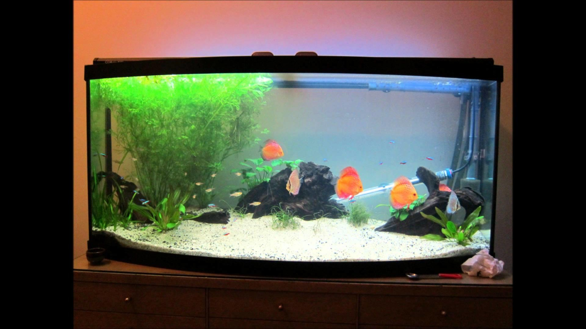 Amazing Large Modern Fish Tank Ideas Fandung