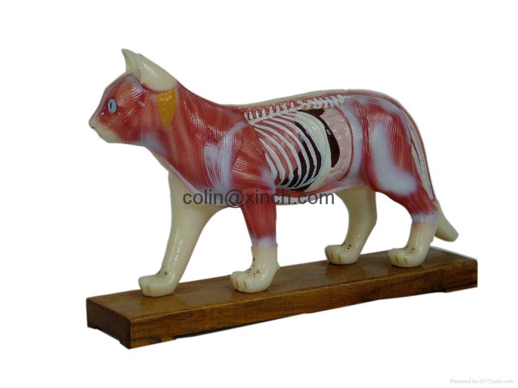 Animal Model Dig Pig Cat Horse