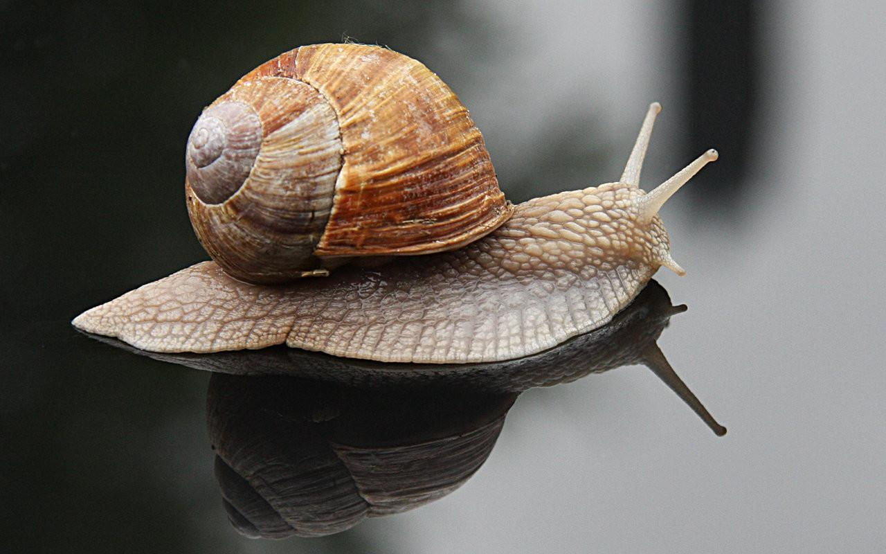 Animal World Does Snail Grow Its Shell