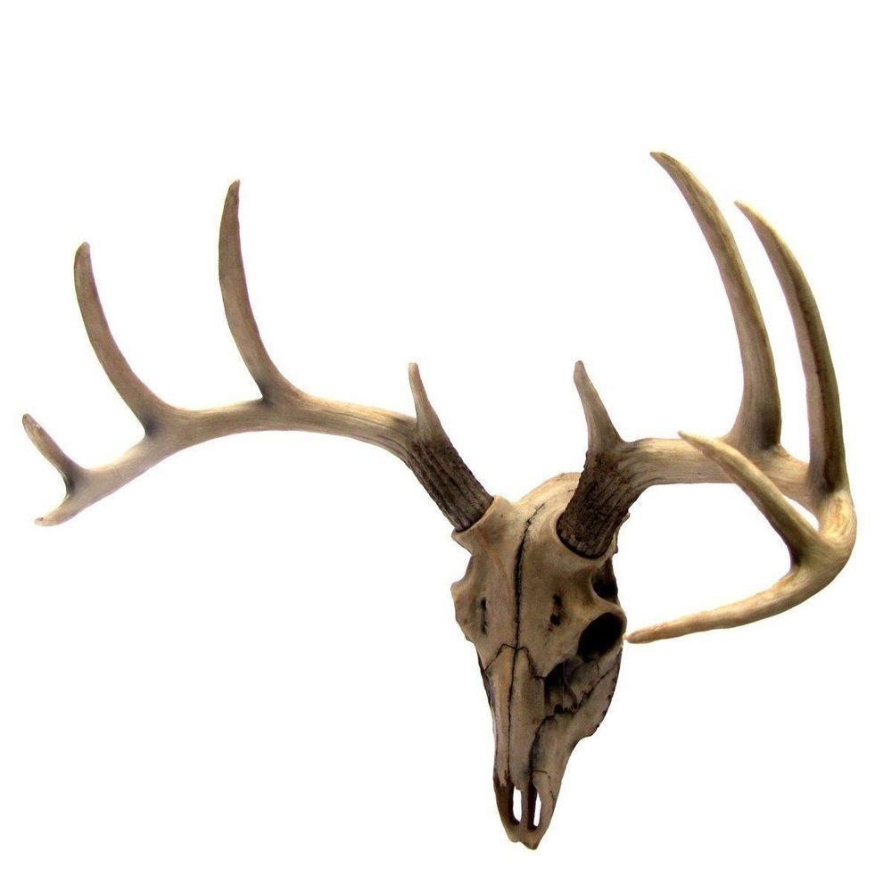 Antler Skull Buck Deer Head Bust Wall Hanging