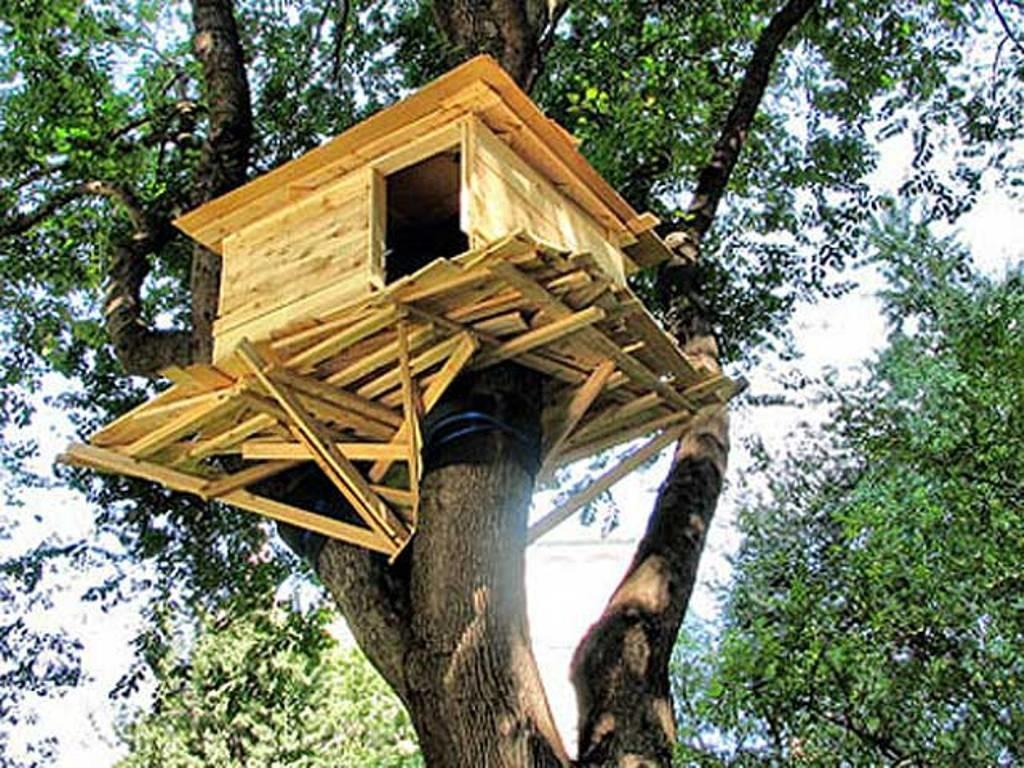 Appealing Treehouse Designs Kids Iimajackrussell
