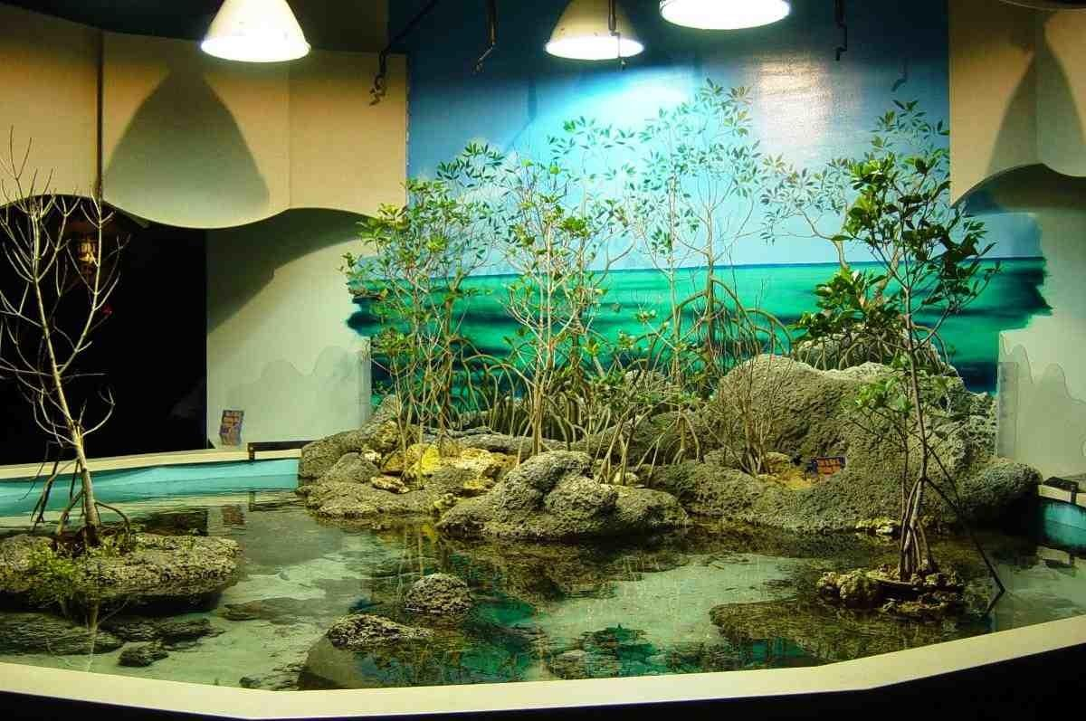 Aquarium Decor Popular Styles Fish Tanks