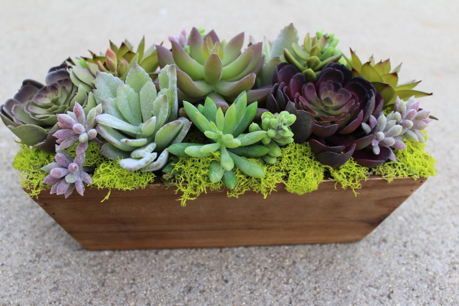 Artificial Succulent Rectangle Wood Box