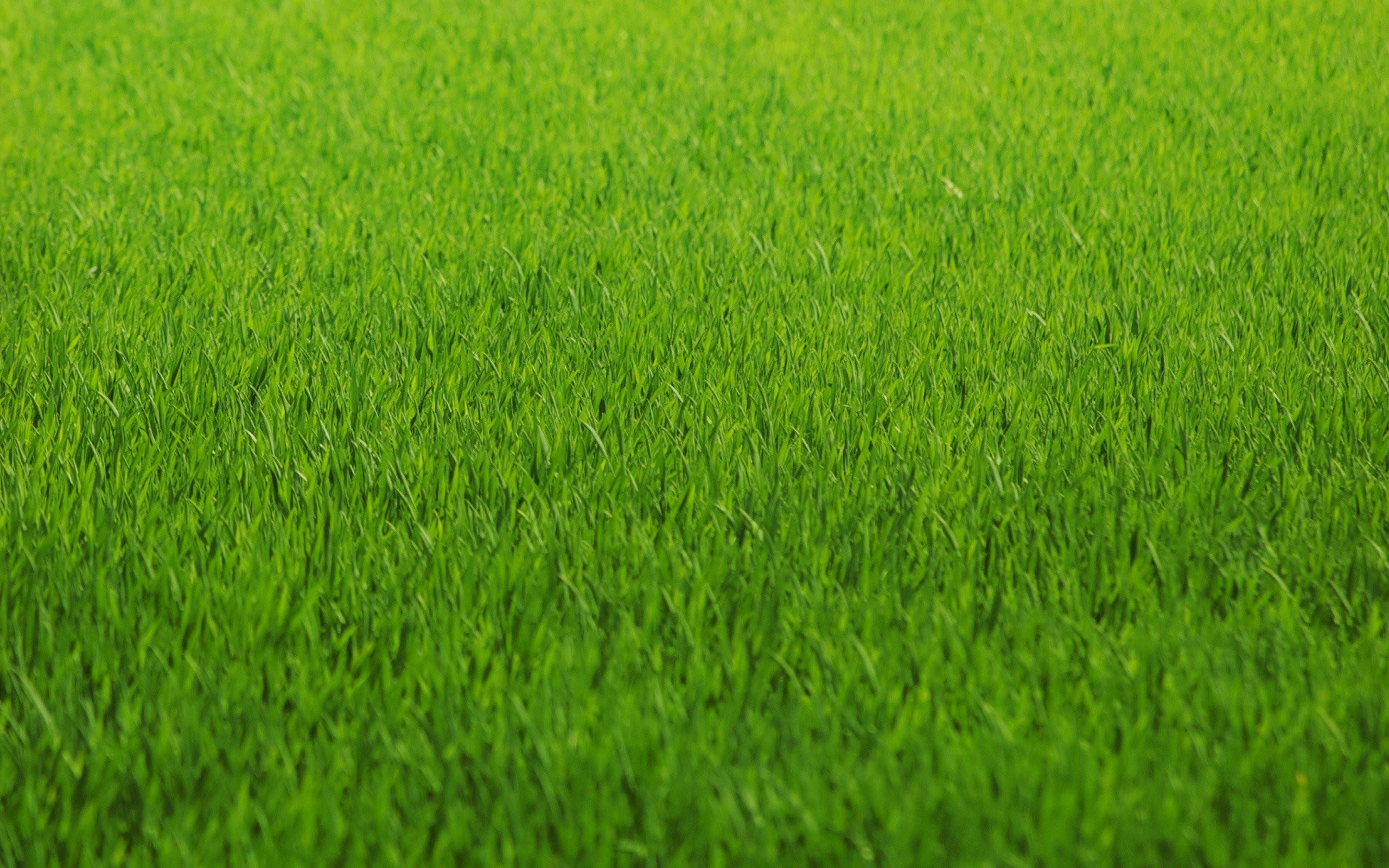 August Lawn Care Tips