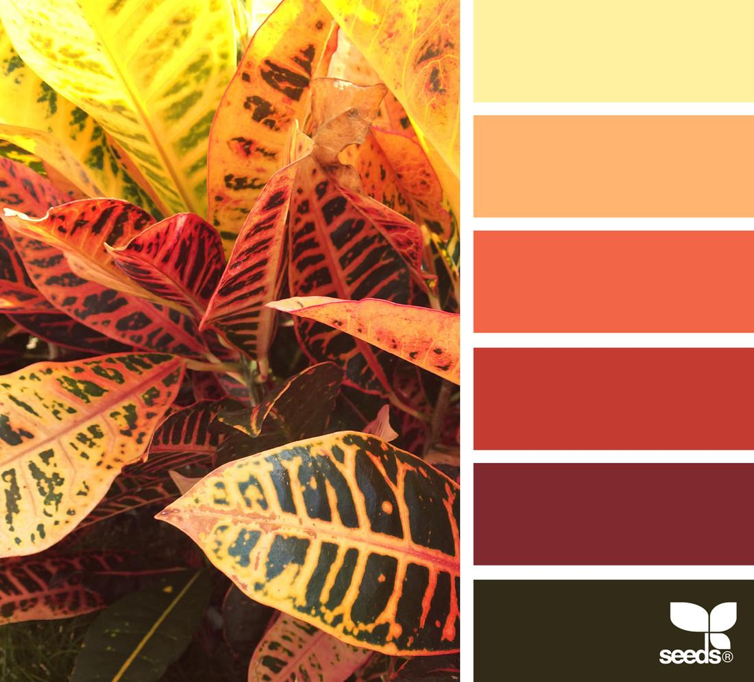 Autumn Color Design Seeds