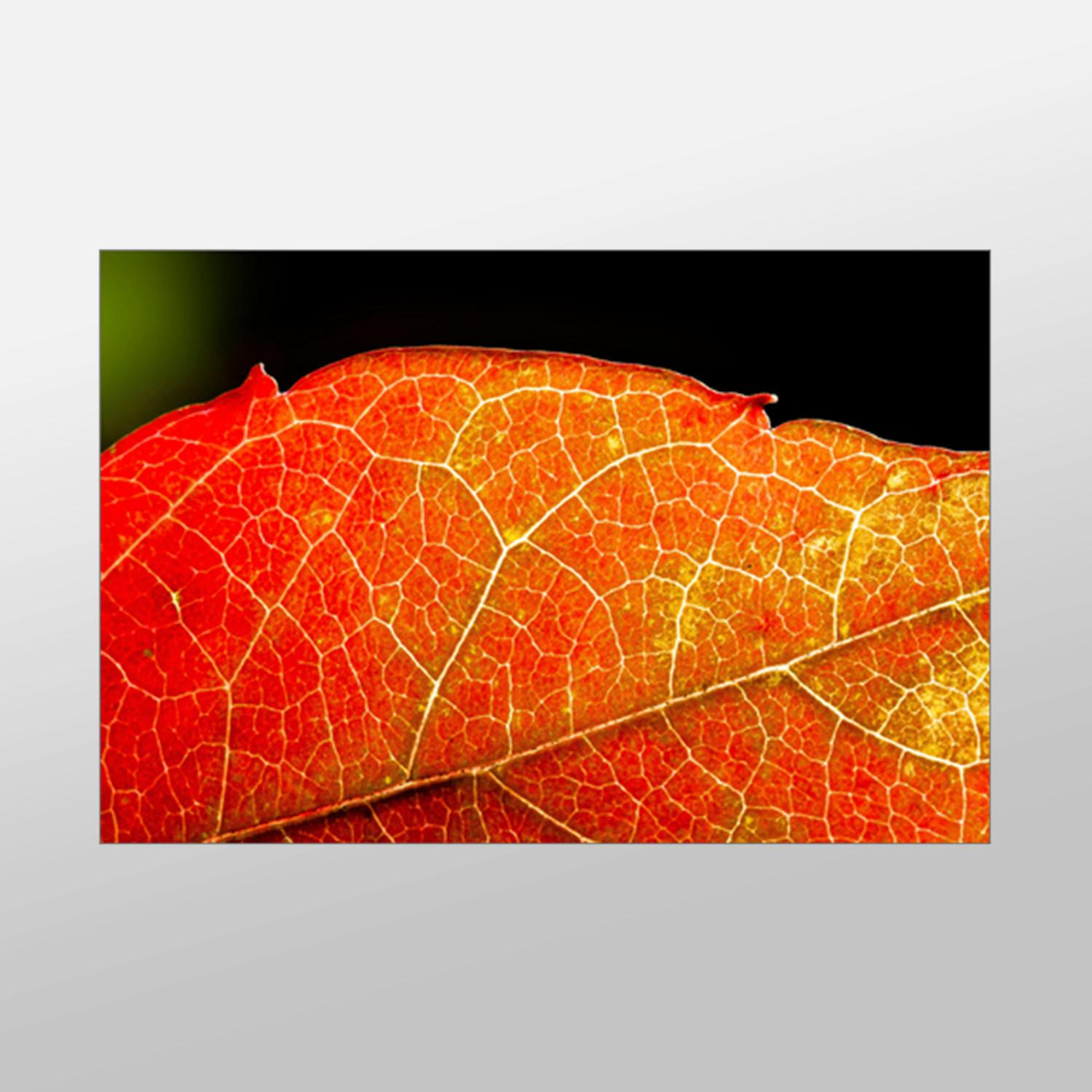 Autumn Leaf Canvas Art Close Wall