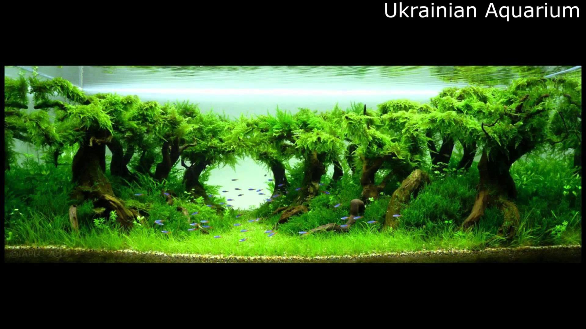 Awesome Aquascape Underwater Landscapes Aquascaping