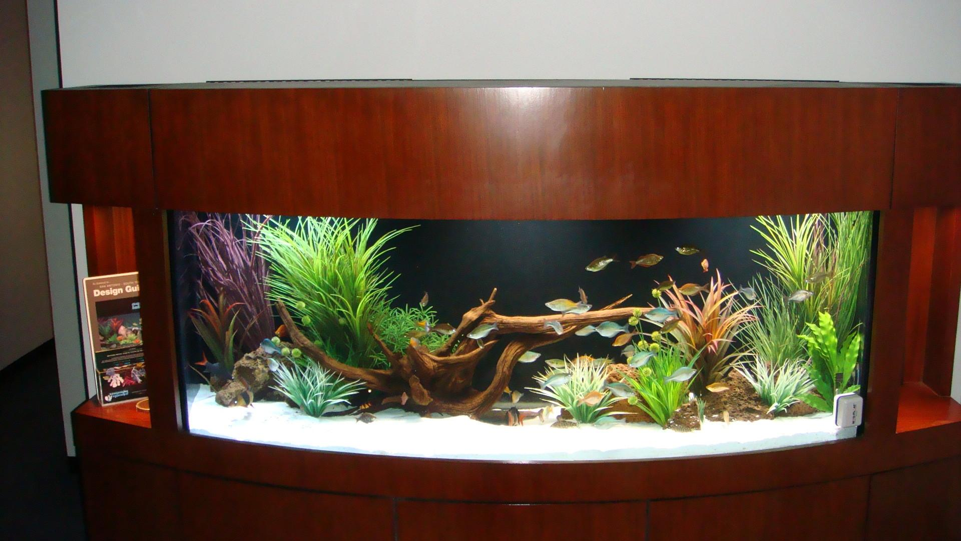 Awesome Fish Tank Idea Cool Ideas 6741