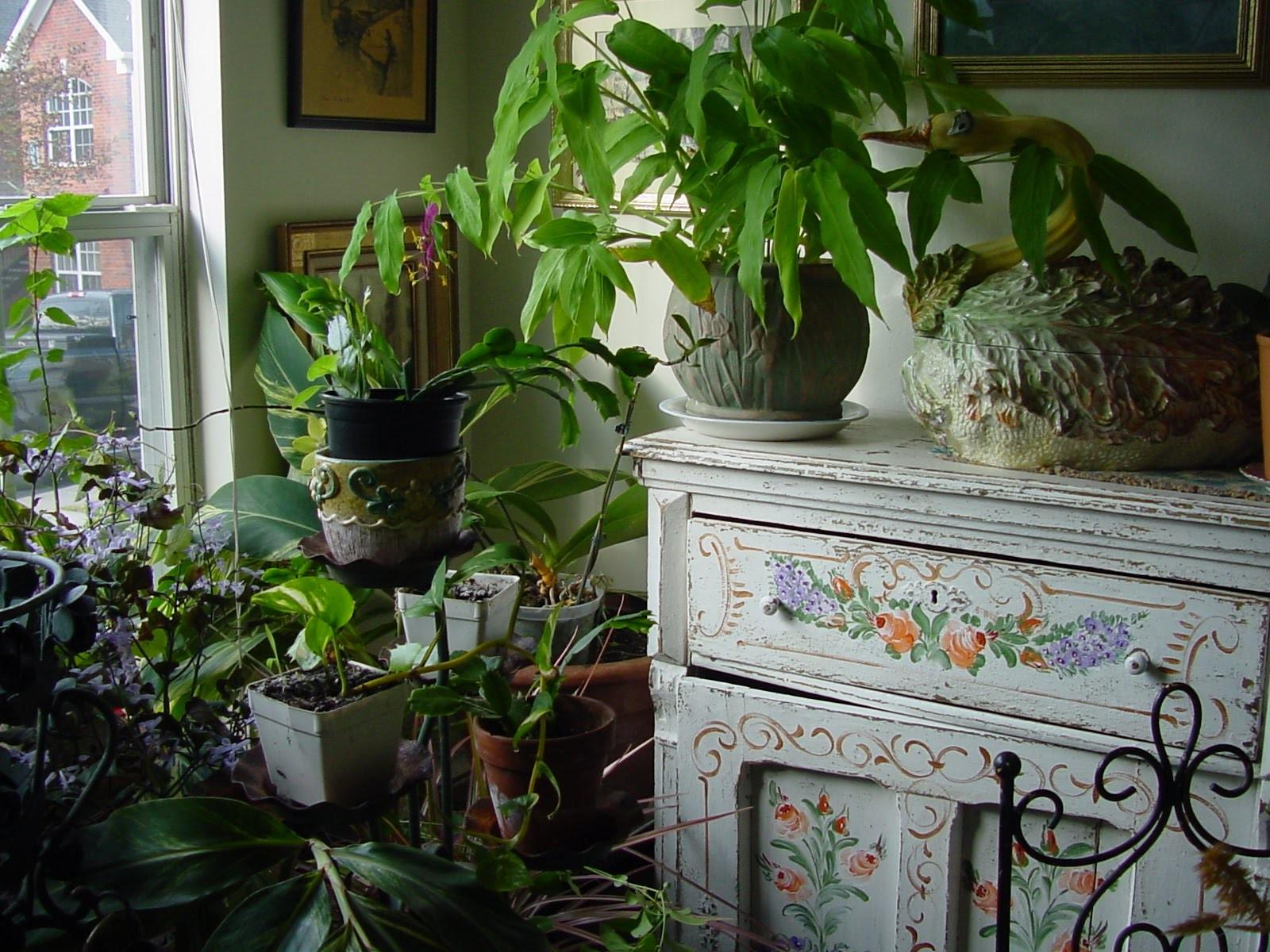 Awesome Indoor Plant Decoration Ideas Introduce