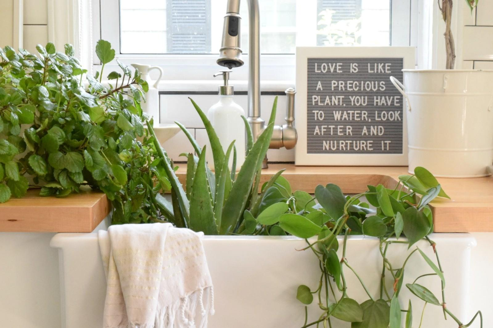Awesome Low Maintenance Indoor Plants Interior