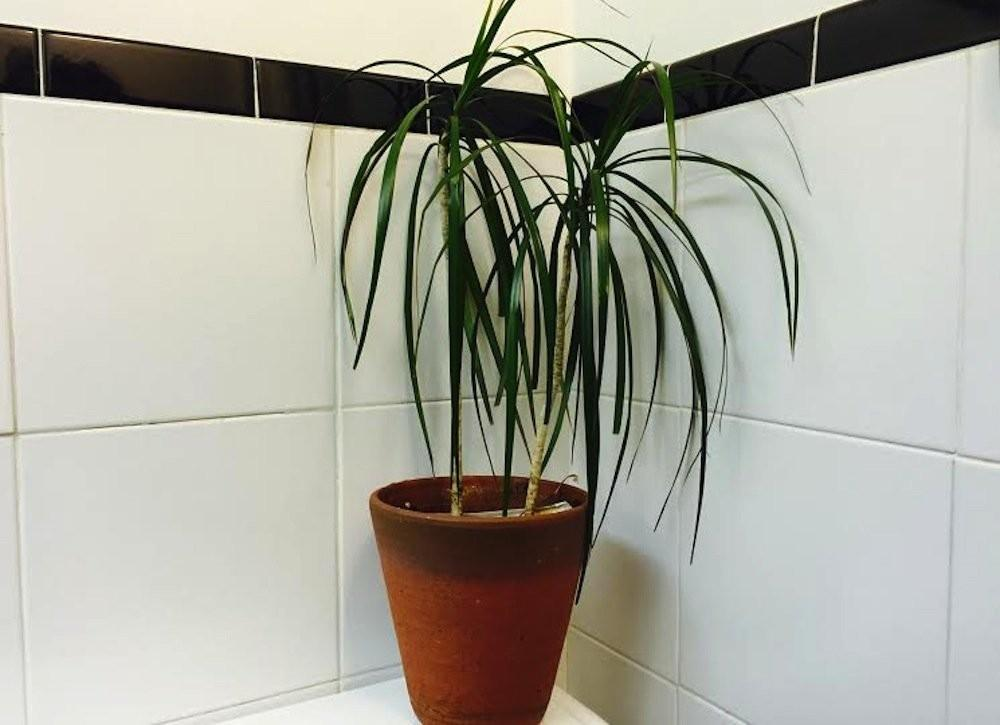 Bathroom Plants All Time Favorites Bob Vila