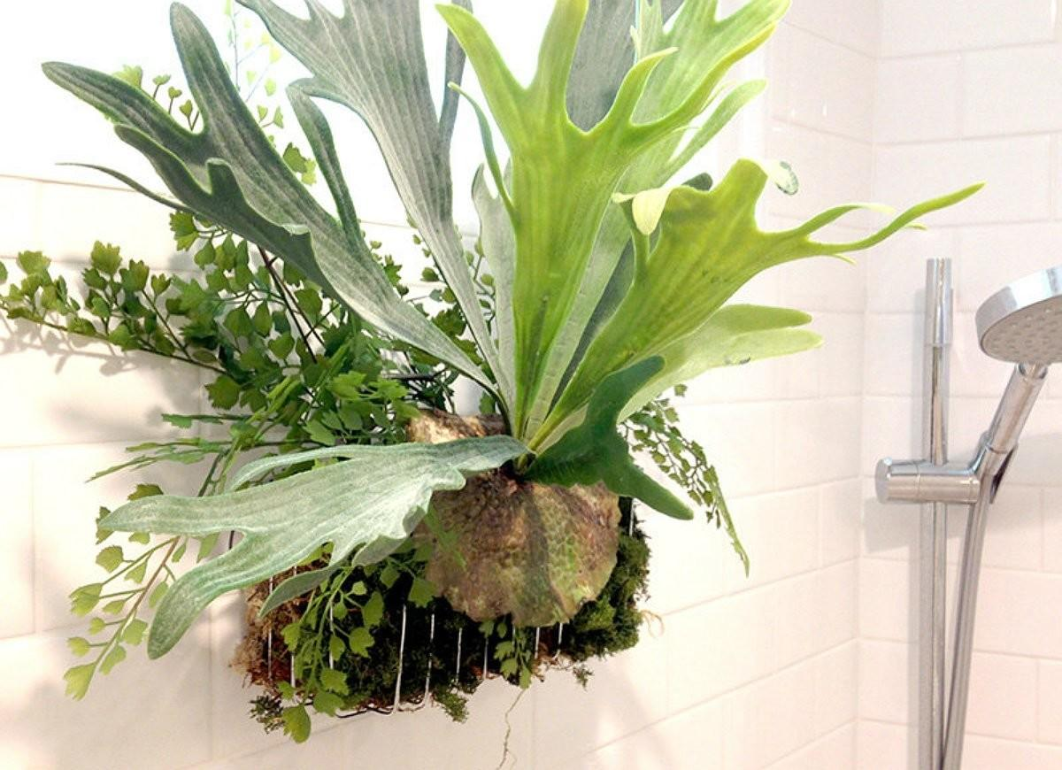 Bathroom Plants Best Indoor Picks Every