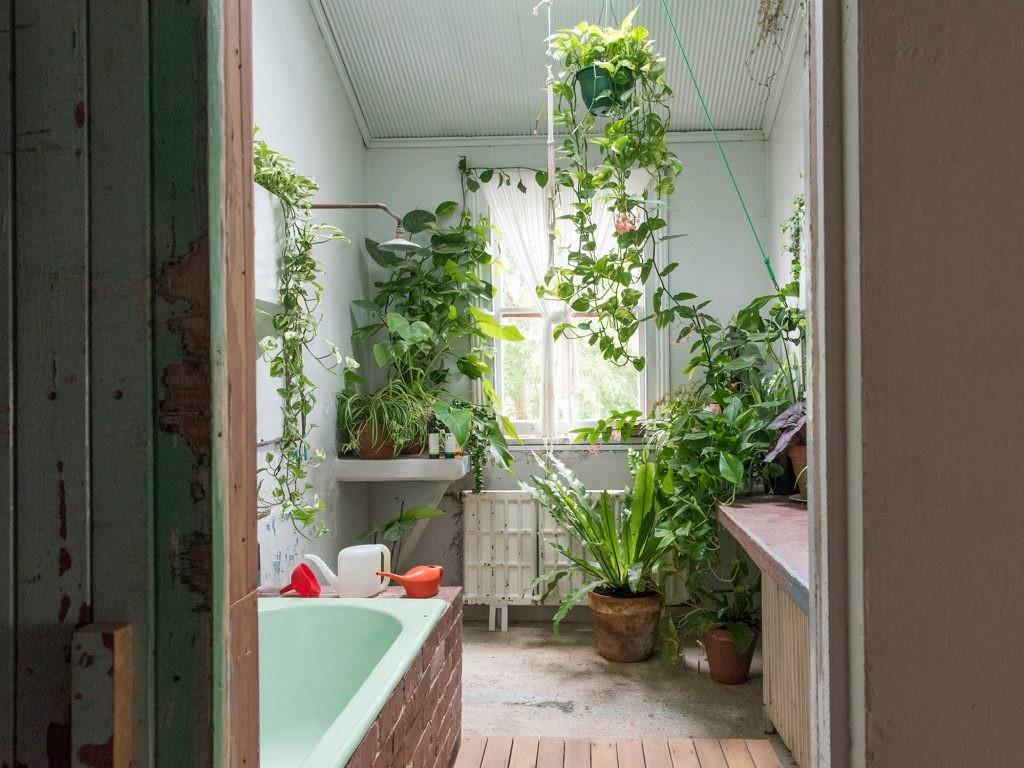 Bathroom Plants Light Bathrooms