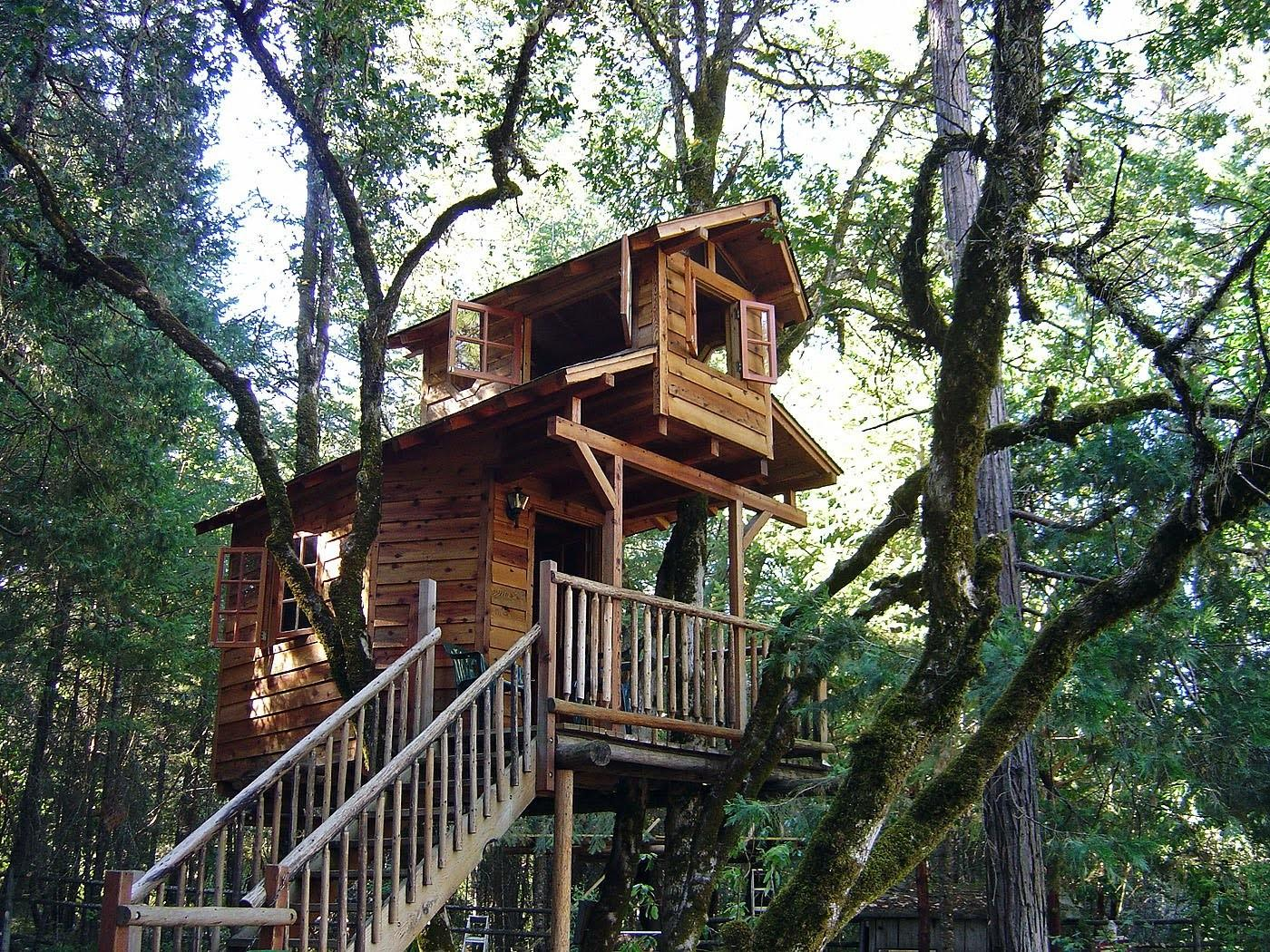Bear Tree Houses
