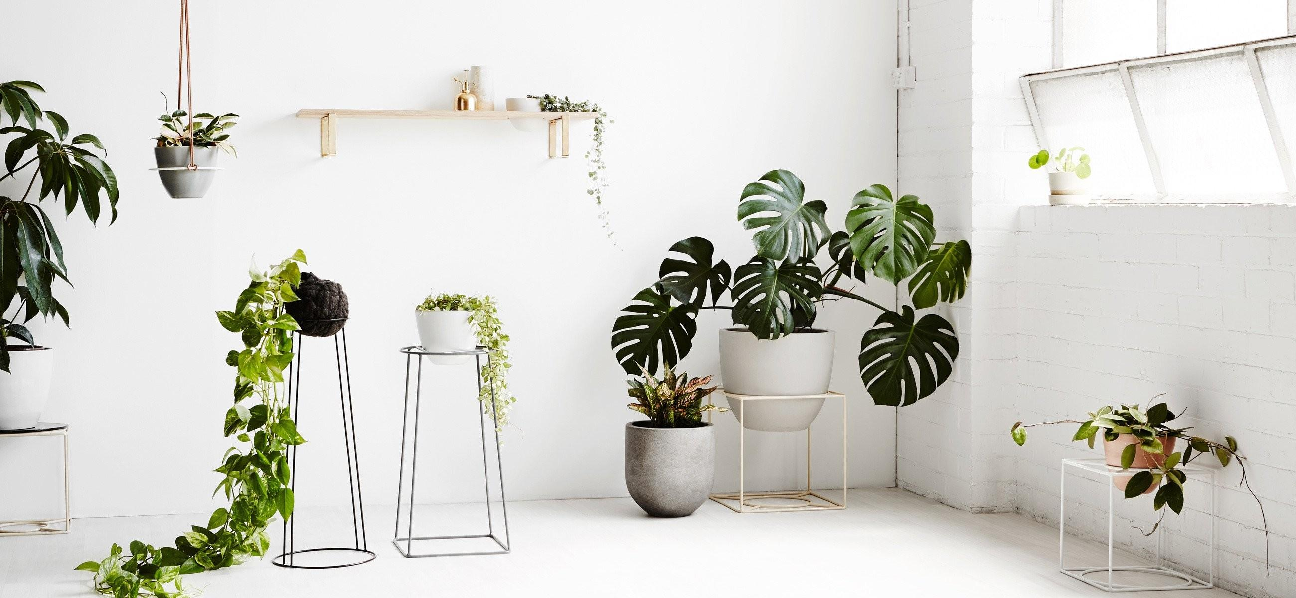 Beautiful Functional Plant Stands Encourage