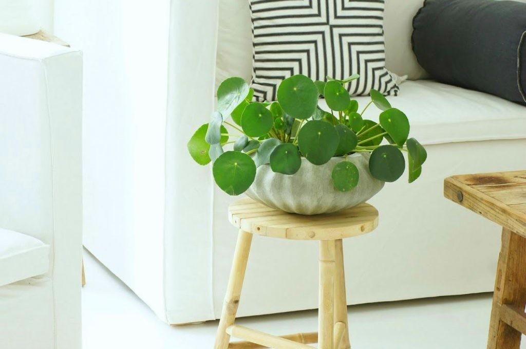 Beautiful Indoor House Plants Also Easy