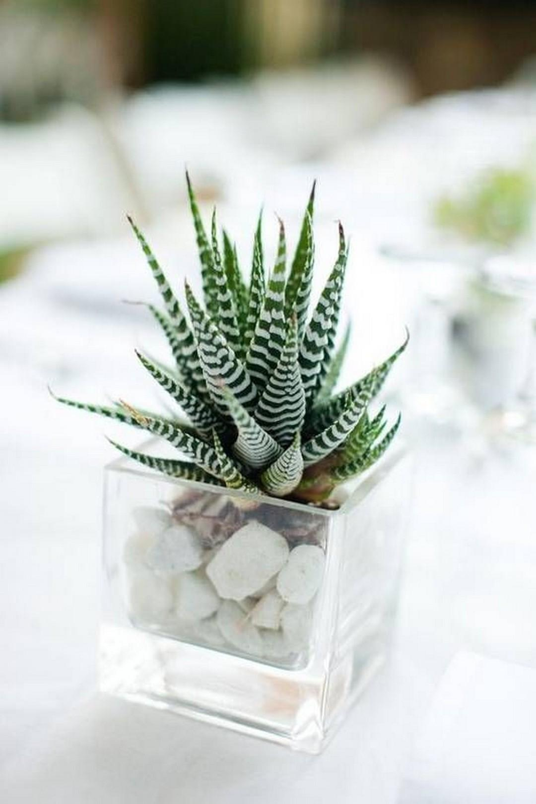 Beautiful Indoor Outdoor Succulent Plants Ideas