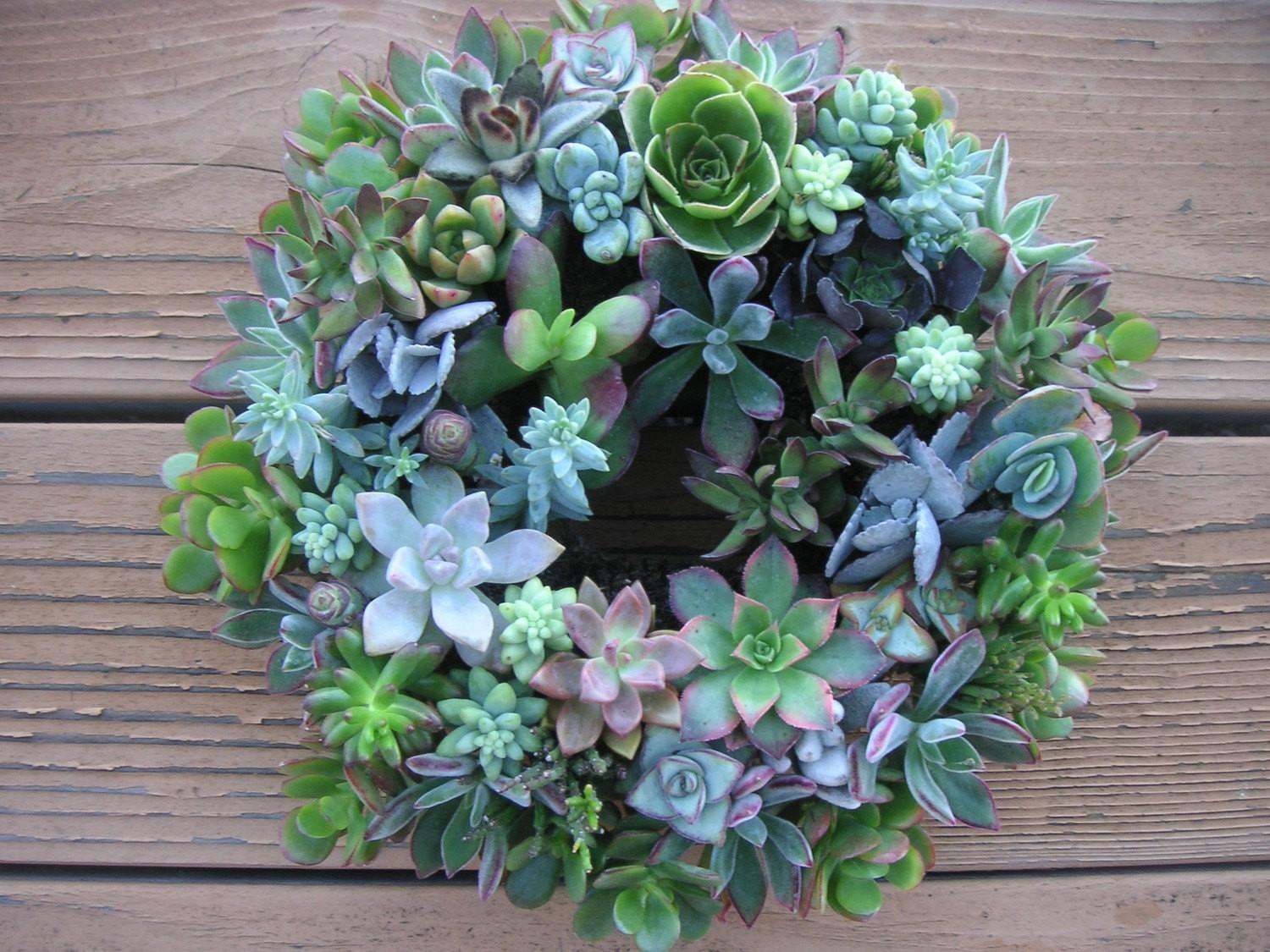 Beautiful Living Succulent Centerpiece Wreath Ready