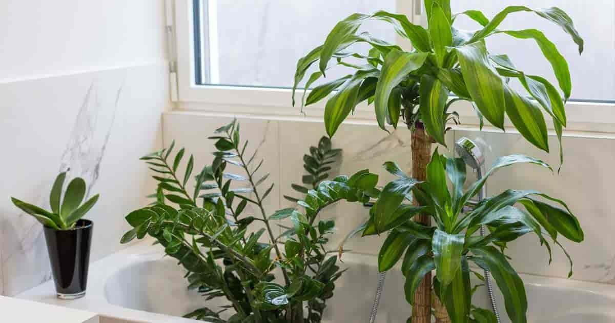 Best Bathroom Plants Choose