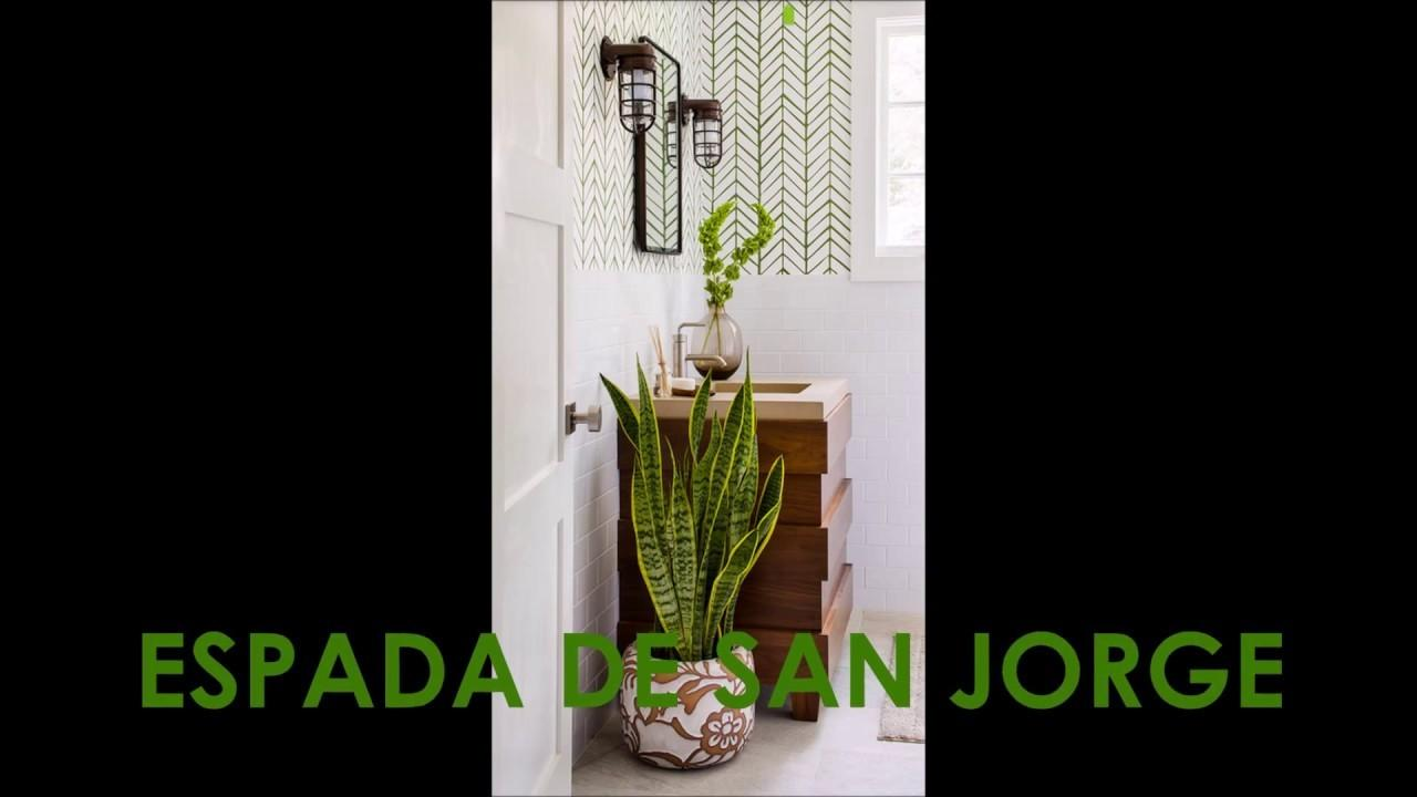 Best Bathroom Plants Ideas