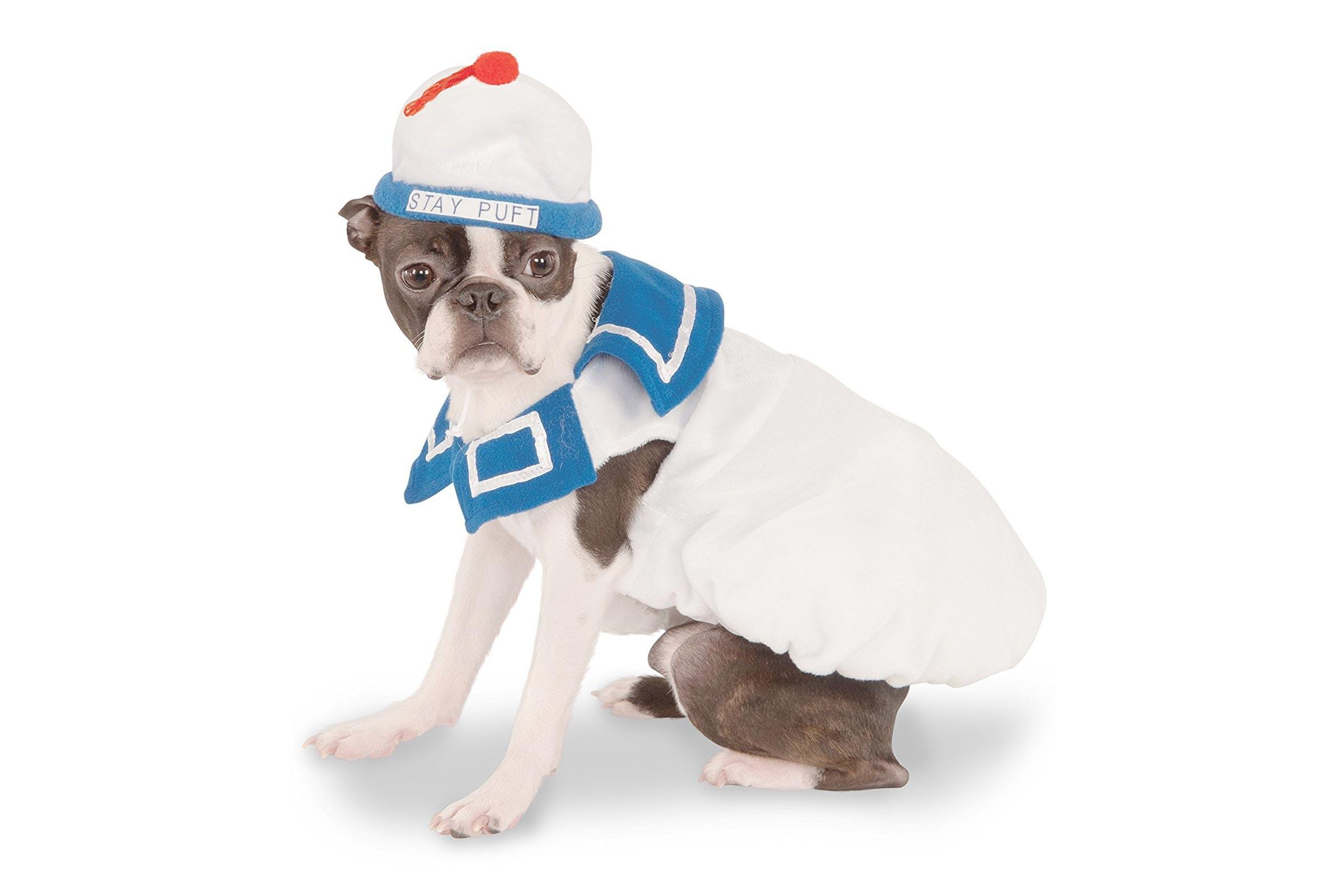 Best Funny Halloween Costumes Dogs Dog