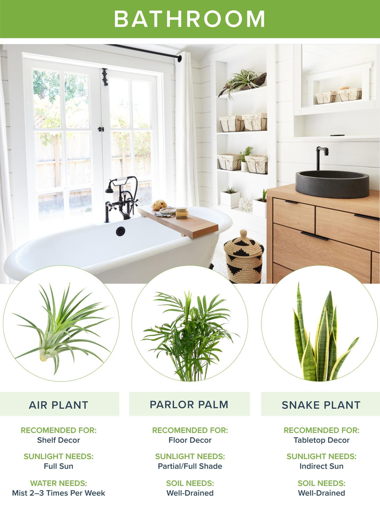 Best Houseplants Every Room Going2natural