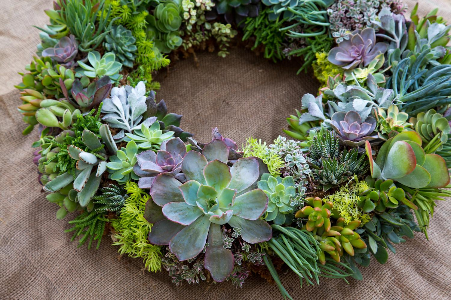 Best Ideas Diy Succulent Wreath Your Garden