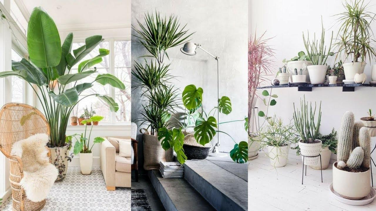 Best Indoor Plants Ideas Simple Ways Decorate