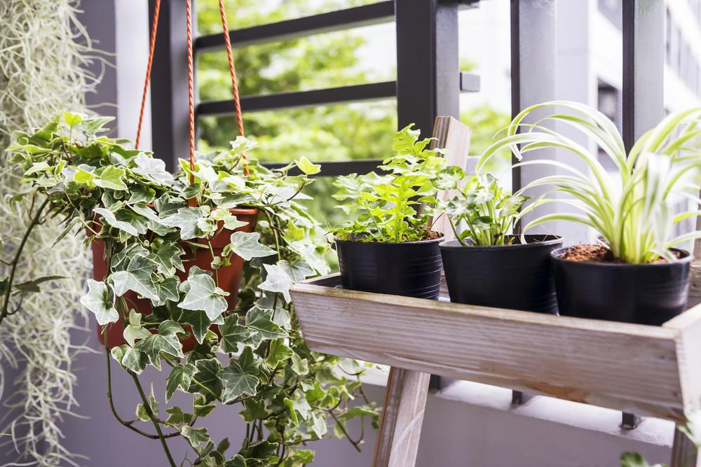 Best Plants Your Bathroom Sanctuary Bathrooms
