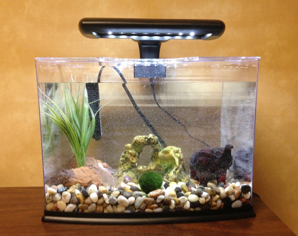 Betta Fish Aquarium Decorations Design Ideas